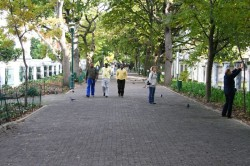 The avenue leading to the Company Gardens
