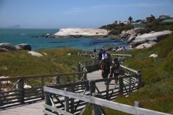 board walks make penguin viewing safe for children