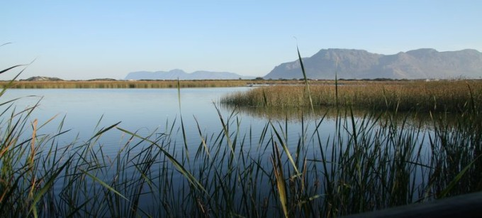 This is Rondevlei, a bird sanctuary on the Cape flats._result
