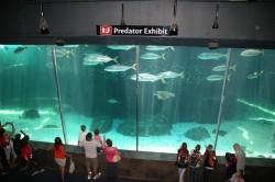 predators exhibition